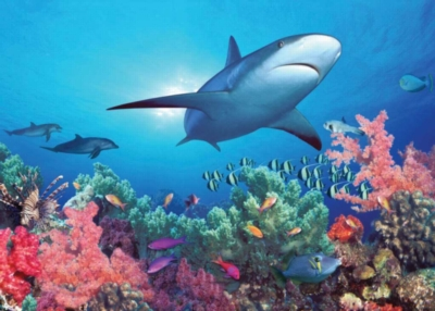 Animal Planet: Reef Shark - 200pc Jigsaw Puzzle by Ravensburger
