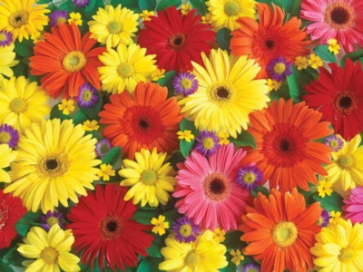 Delightful Daisies - 300pc Large Format Jigsaw Puzzle by Ravensburger