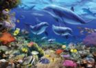 Family of Dolphins - 1000pc Jigsaw Puzzle by Ravensburger