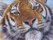 Animal Planet: Bengal Tiger - 1000pc Jigsaw Puzzle by Ravensburger