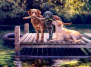 Dog Days - 1000pc Jigsaw Puzzle by Buffalo Games