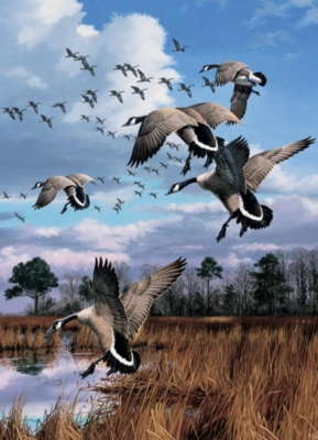 Canada Geese - 1000pc Jigsaw Puzzle by Cobble Hill