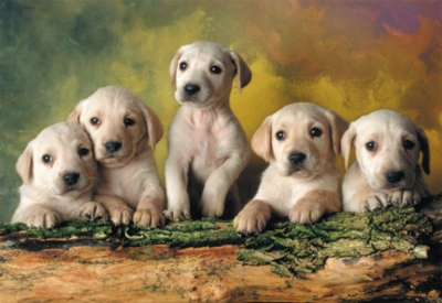Labrador Retrievers - 500pc Jigsaw Puzzle By Educa