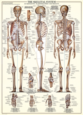 The Skeletal System - 1000pc Jigsaw Puzzle by Eurographics