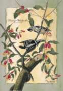 Downy Woodpecker - Standard Flag by Toland