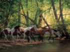 Shady Creek Horses - 500pc Jigsaw Puzzle by Cobble Hill