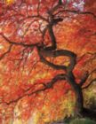 Colorful Canopy - 500pc Jigsaw Puzzle by Springbok