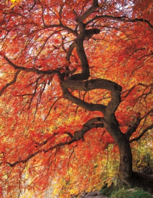 Springbok Jigsaw Puzzles - Colorful Canopy