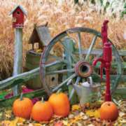 Pumpkin Harvest - 500pc Jigsaw Puzzle by Springbok