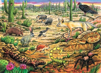 Cobble Hill Children's Puzzles - Life in the Desert