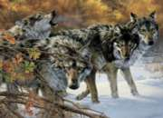 Wolf Talk - 1000pc Jigsaw Puzzle by Cobble Hill
