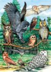 North American Owls - 35pc Tray Puzzle by Cobble Hill