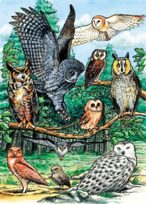 Cobble Hill Children's Puzzles - North American Owls