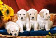 Jigsaw Puzzles - Puppies with Sunflower