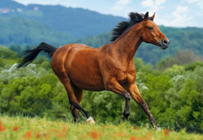 Reddish-brown Horse - 1000pc Jigsaw Puzzle By Castorland
