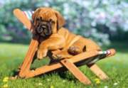 Puppy on Deckchair - 260pc Jigsaw Puzzle by Castorland