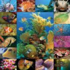 Aquatic Collection - 500pc Jigsaw Puzzle by Springbok