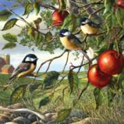 Jigsaw Puzzles - Chickadees & Apples