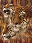 Tiger Stripes - 500pc Jigsaw Puzzle By Sunsout