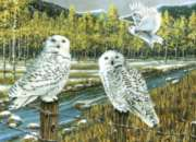 Cobble Hill Jigsaw Puzzles - Snowy Owl Gathering
