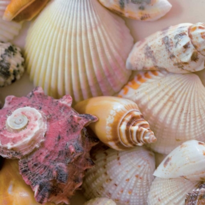 Beach Shells - 500pc Square Jigsaw Puzzle By Ravensburger