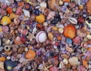 Hard Jigsaw Puzzles - Sea Shells