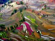 Educa Jigsaw Puzzles - Rice Paddies, China