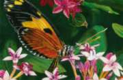 Butterfly Perch - 100pc Jigsaw Puzzle By Melissa & Doug