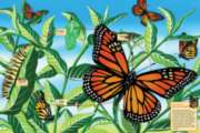 Life Cycle of a Monarch Butterfly - 48pc Floor Puzzle By Cobble Hill