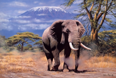 Tomax Jigsaw Puzzles - Elephant In Amboseli