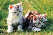 Loveable Kittens - 1000pc Jigsaw Puzzle by Tomax