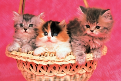 Kittens - 1000pc Jigsaw Puzzle by Tomax