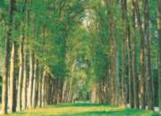 Tree-Lined Road - 500pc Jigsaw Puzzle by Tomax
