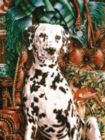 Dalmatian - 500pc Jigsaw Puzzle By Sunsout