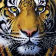 Golden Tiger Face - 1000pc Jigsaw Puzzle By Sunsout