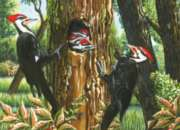 Cobble Hill Jigsaw Puzzles - Pileated Woodpeckers