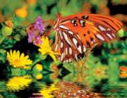 Magnificent Monarch - 500pc Jigsaw Puzzle by Springbok