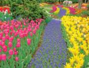 Trail of Blooms - 500pc Jigsaw Puzzle by Springbok