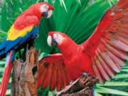 Scarlet Macaw - 400pc Family Jigsaw Puzzle by Springbok