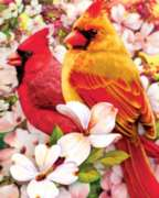 Springtime Cardinals - 36pc Large Format Jigsaw Puzzle by Springbok