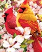 Springbok Jigsaw Puzzles - Springtime Cardinals