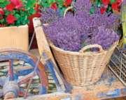 Springbok Jigsaw Puzzles - Basket of Lavender