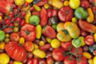 Tomatoes - 1000pc Jigsaw Puzzle by Piatnik