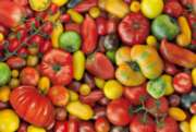 Hard Jigsaw Puzzles - Tomatoes