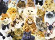 Jigsaw Puzzles for Kids - Cat Pride