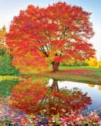 Springbok Jigsaw Puzzles - Maple Reflections