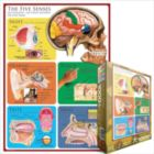 The Five Senses - 1000pc Jigsaw Puzzle by Eurographics