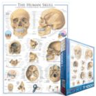 Human Skull - 1000pc Jigsaw Puzzle by Eurographics