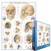 Eurographics Jigsaw Puzzles - Human Skull