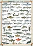 Eurographics Jigsaw Puzzles - Freshwater Fish